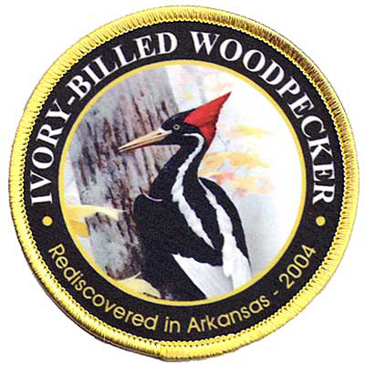 Ivory Billed Woodpecker Patch